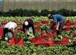 lavoratori stranieri nei campi